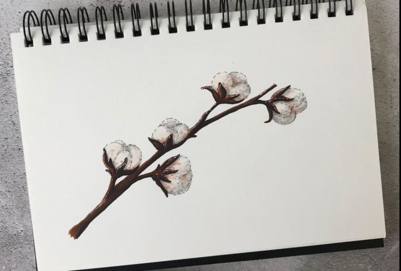 Markers illustration - Cotton branch