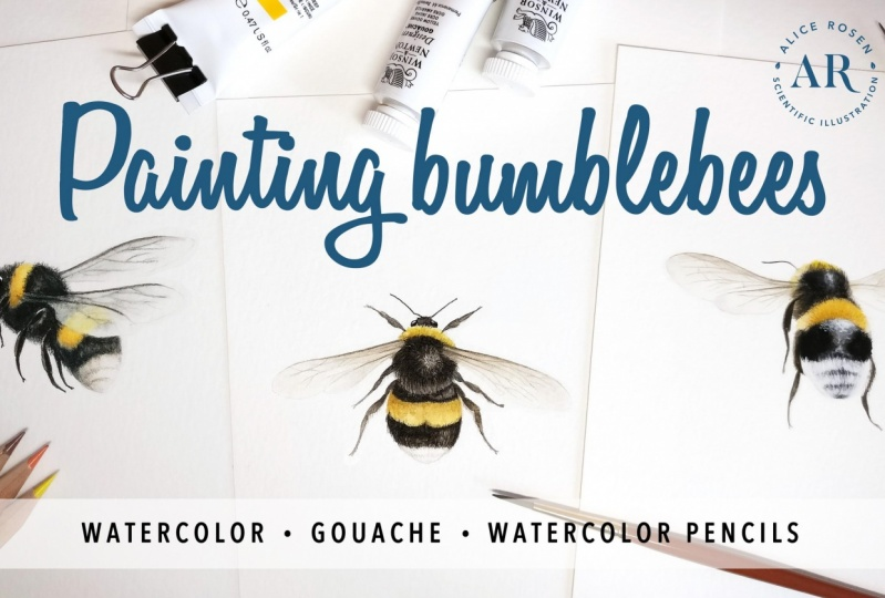 [PUBLISHED] Painting Bees in Watercolor, Gouache & Watercolor Pencils