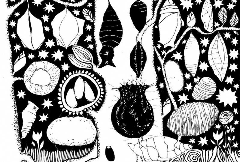 doodling around cocoons