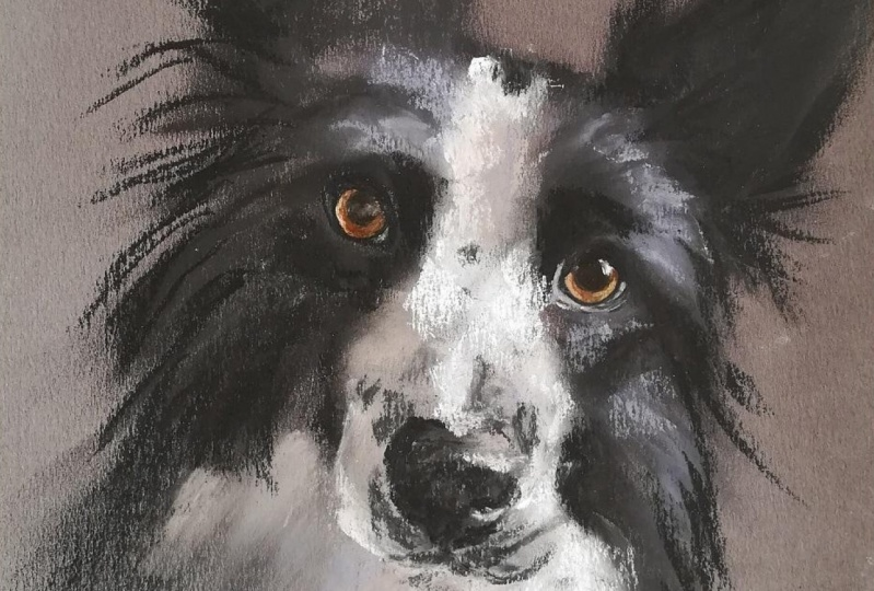 Sketching Animals in Soft Pastels   Coco