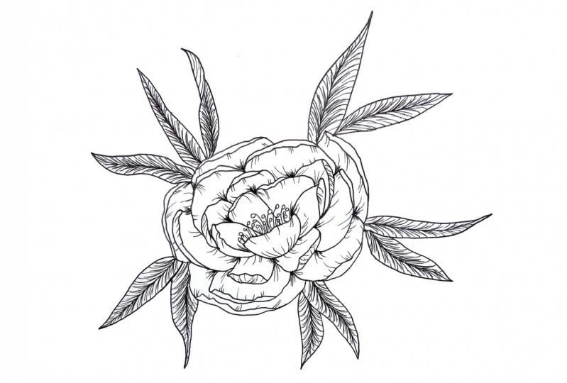 Peony line drawing - beginner