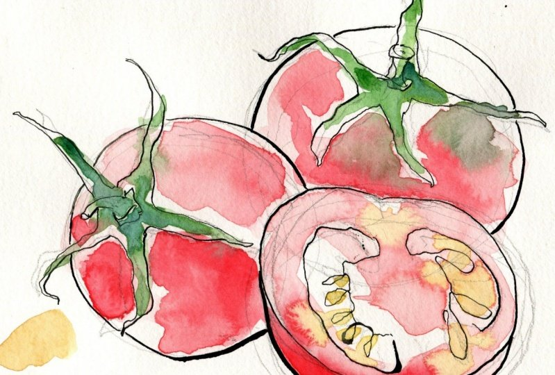 WIP: Loose Watercolor and Ink tomatoes