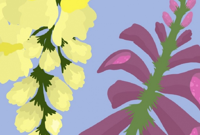 Flowers by Shannon Birmingham