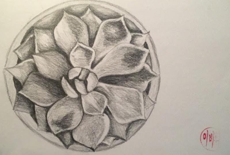 Graphite & Watercolour Succulent