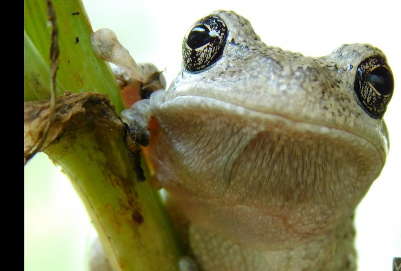 Cute frog (I had to crop the thumbnail. Just open the post for a better picture)
