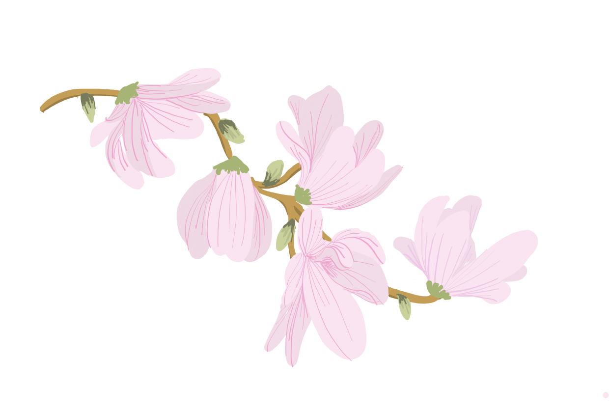 Drawing Vector Flowers Illustrating Simple Florals In Adobe Draw On The Ipad Suzy Lizz Skillshare