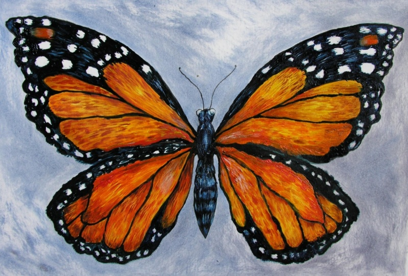 Learn to Draw and Paint a Butterfly