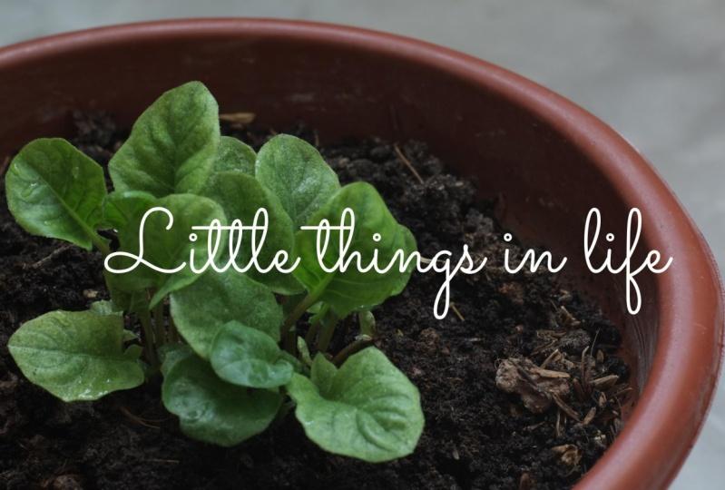 Little things that matter