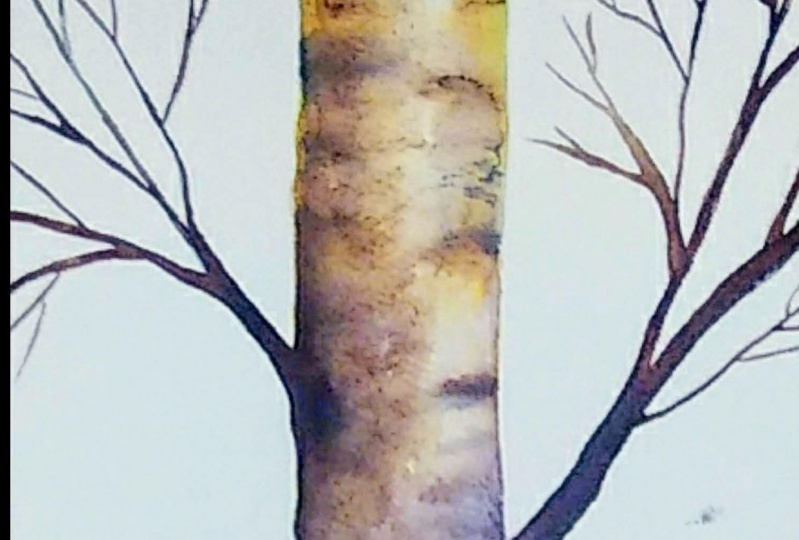 Painting a Birch Tree in Watercolor
