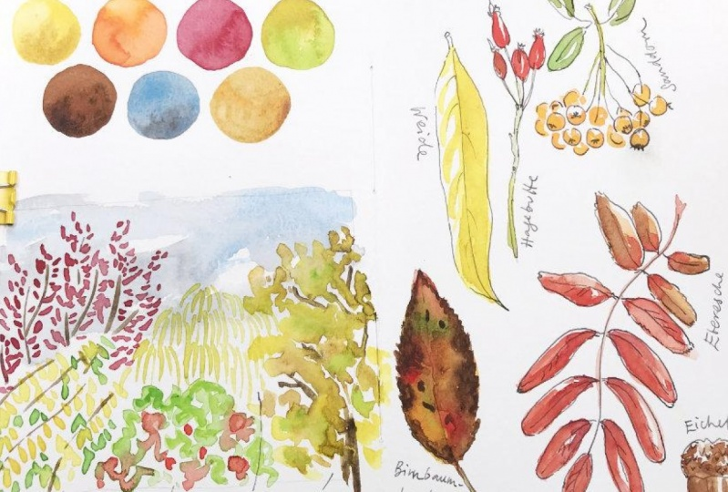 Nature Journaling in Autumn