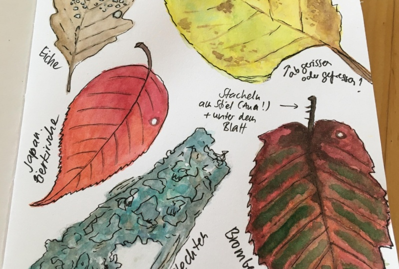 Autumn page in my nature journal