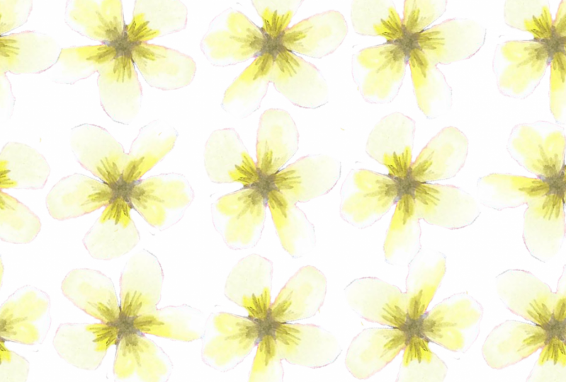 Yellow and White Flower paper