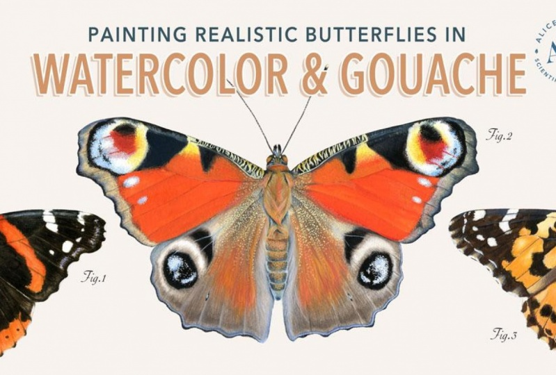 [PUBLISHED] Painting Realistic Butterflies in Watercolor & Gouache