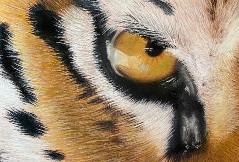 Tiger Eye - PanPastel & Pastel Pencils