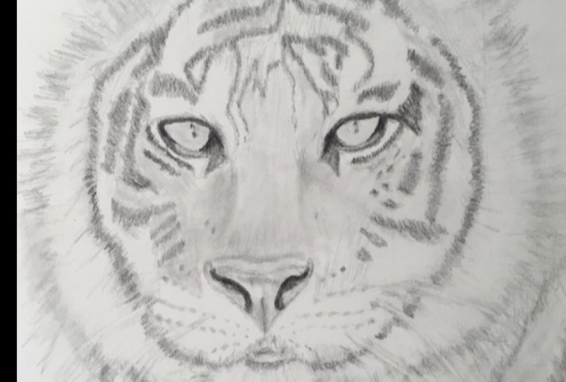 Final Project: Tiger