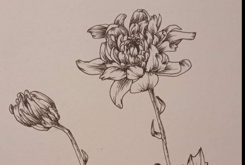 Drawing from real flowers