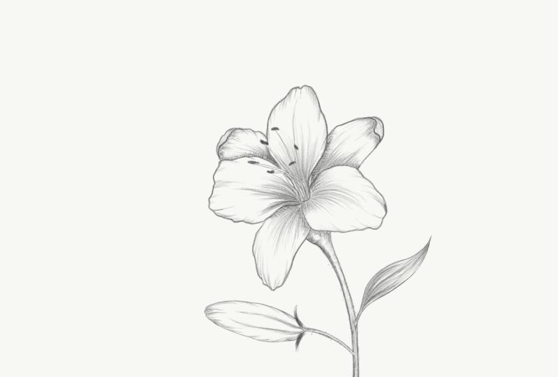 Flower Sketching on iPad in Adobe Sketch