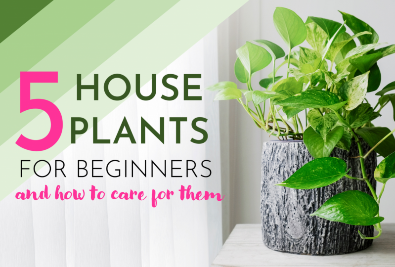 5 House plants for beginners