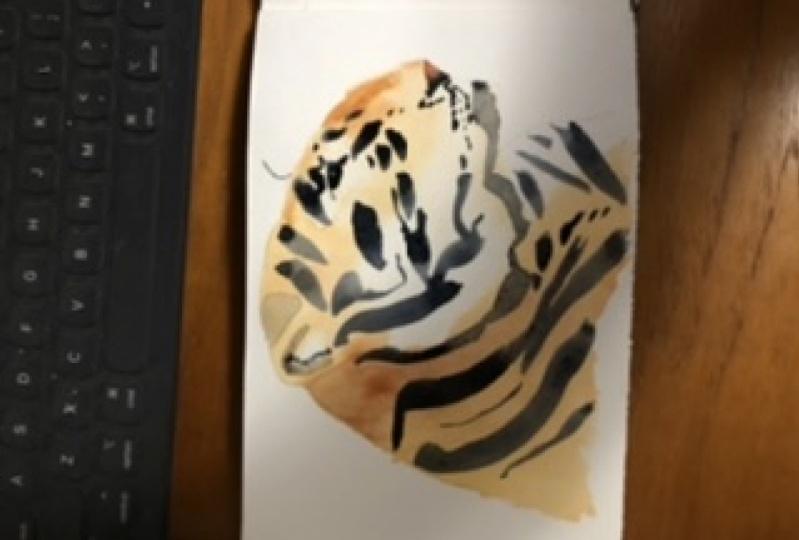 Tiger, sideways