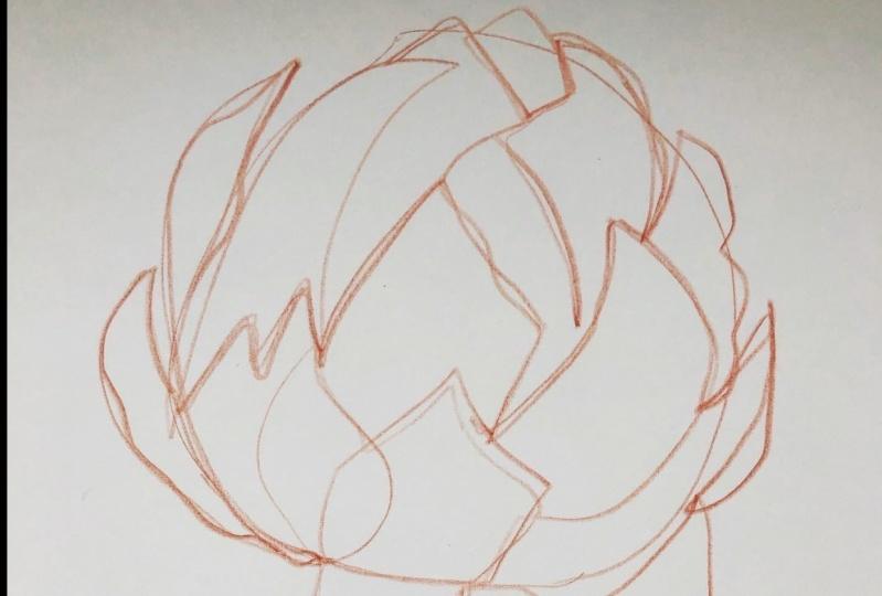 Exploration - artichoke drawings