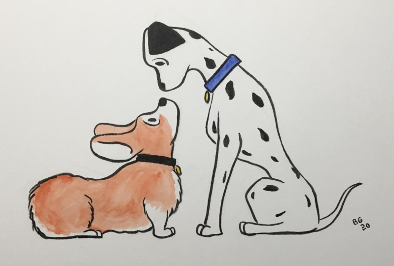 Corgi and Dalmation: First Contact