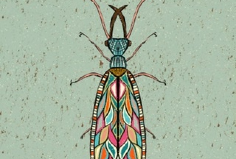 Colorfull insects!