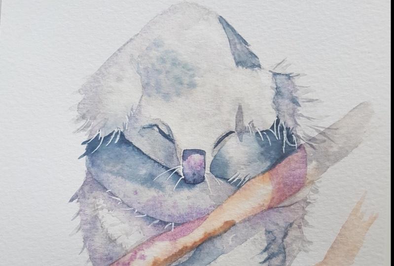 Koala - Amanda