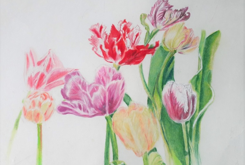 colored pencils flowers leaves updated