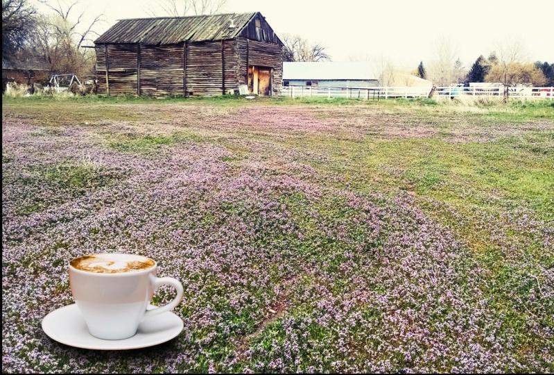barn feild with cup