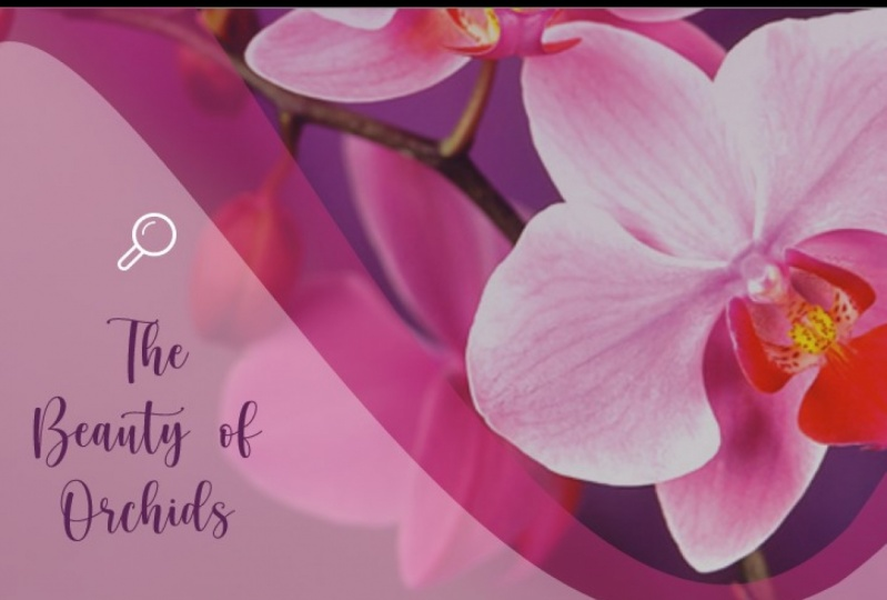 The Beauty of Orchids