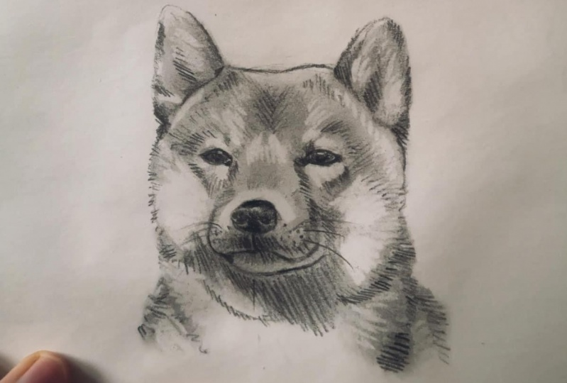 A small dog portrait I made after completing the class