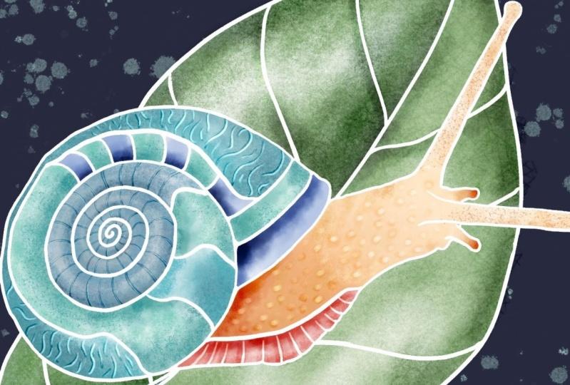 Silky snail