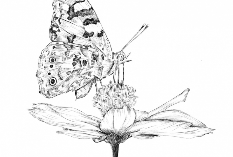 Line Procreate drawing of a butterfly with a flower