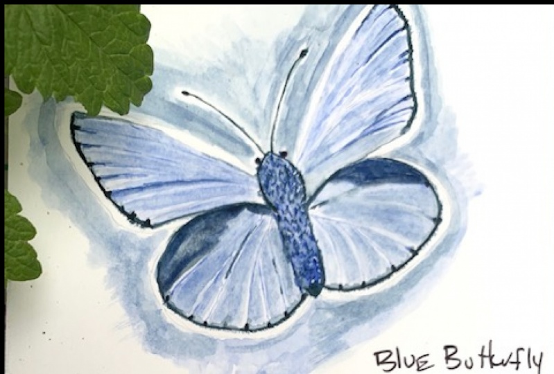 Water Color Butterfly - first attempt.