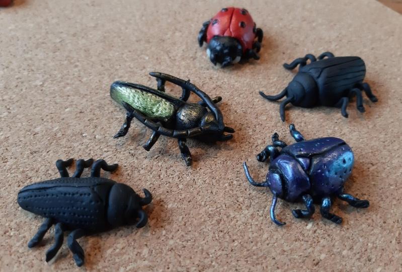 Selection of beetles