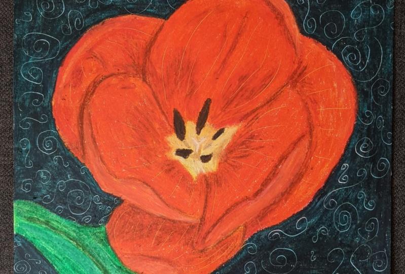 Backyard Tulip