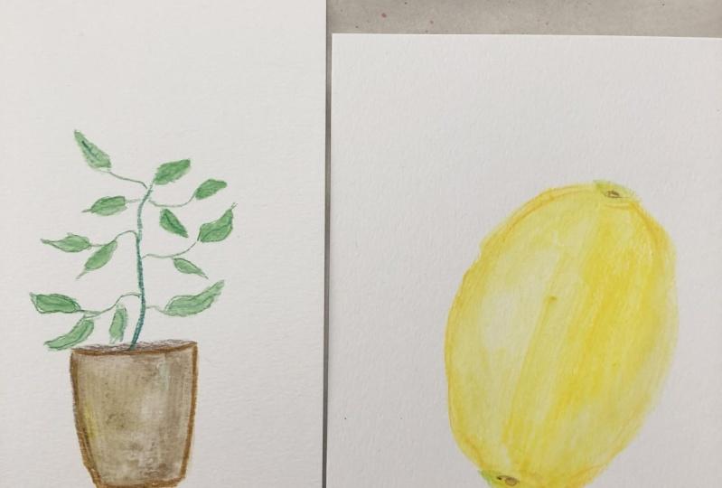 Plant and lemon