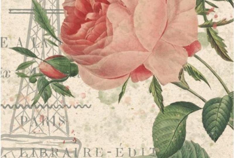 Eiffel Tower Rose