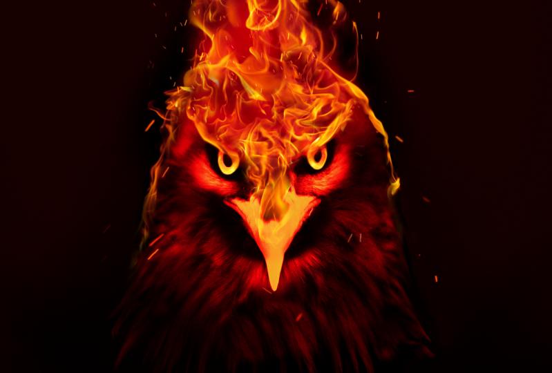 THE ORANGE BIRD