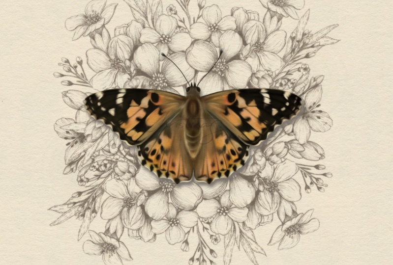 Painted Lady Butterfly and Co