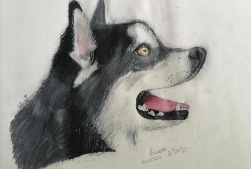 Realistic Husky Wolf