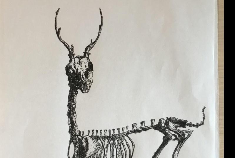 Deer Skeleton Result