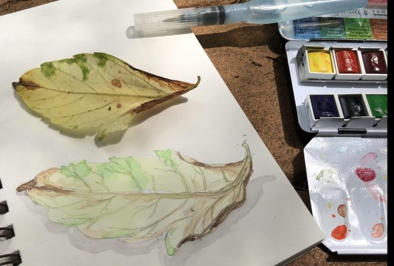 Goose at the pond/Leaf study