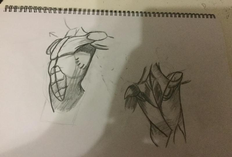 Torso Drawings (Front)