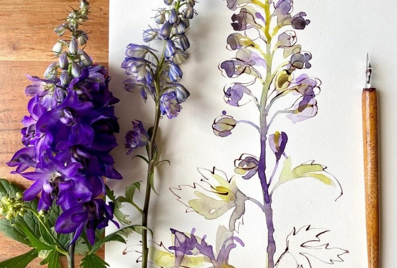 Delphinium, Butterfly bush & Queen Anne's Lace