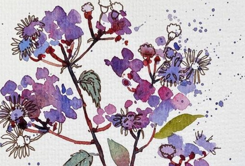 Ink and watercolor Wildflowers
