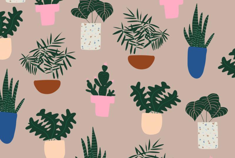 Jalesa's Project - My Plants