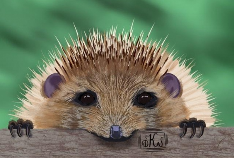 My hedgehogs