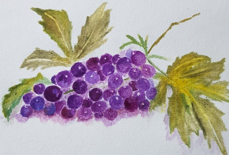 painting grapes in free easy style.