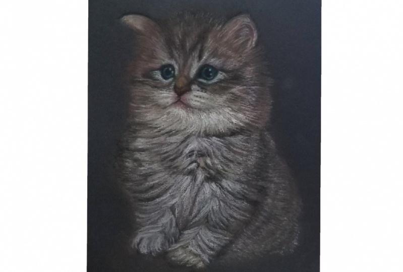 Sketching Animals in Soft Pastels